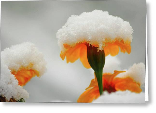 Spring Cold Snap Greeting Card