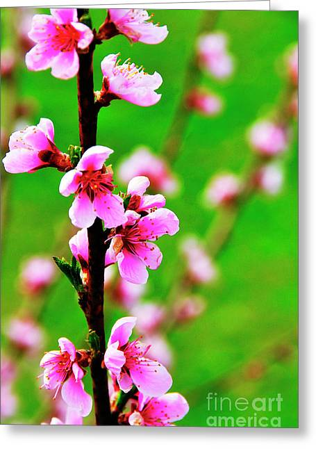 Spring Color Greeting Card by Thomas R Fletcher