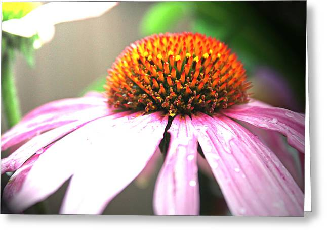 Spring Colors Greeting Card by Becca Brann