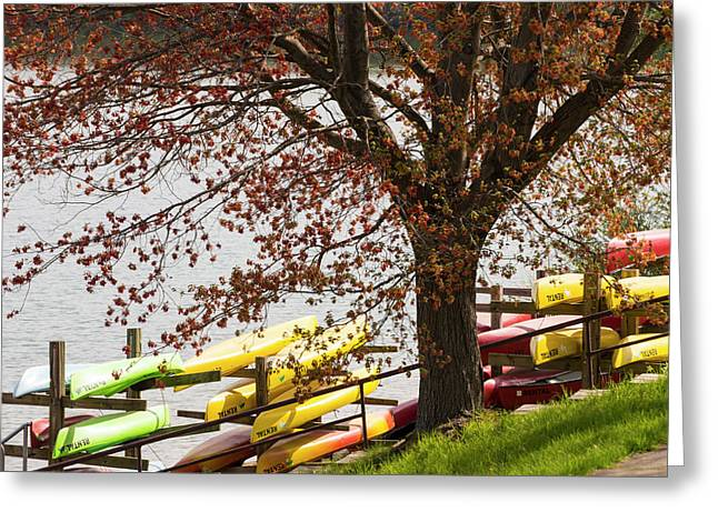 Spring Colors Greeting Card by Bill Caldwell