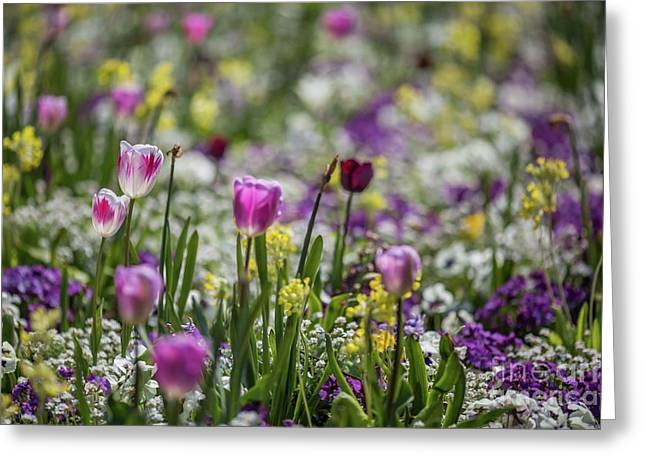 Spring Colors Greeting Card by Eva Lechner