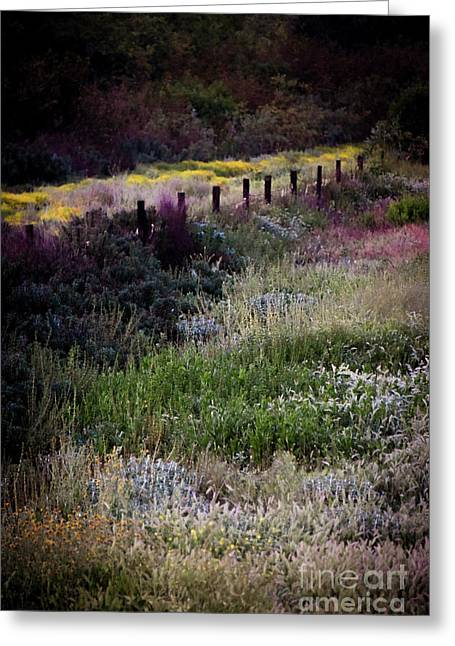 Greeting Card featuring the photograph Spring Colors by Kelly Wade