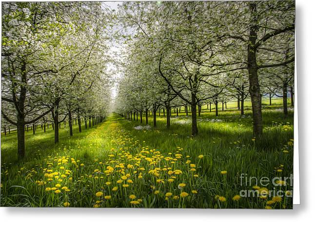 Spring Colors1 Greeting Card by Bruno Santoro