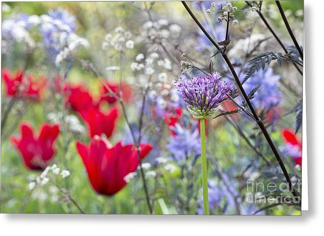 Spring Colour Greeting Card by Tim Gainey