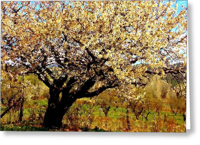 Greeting Card featuring the photograph Spring Comes To The Old Cherry El Valle New Mexico by Anastasia Savage Ealy