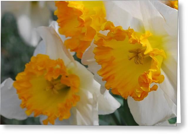 Spring Daffodils Greeting Card by Linda Sramek