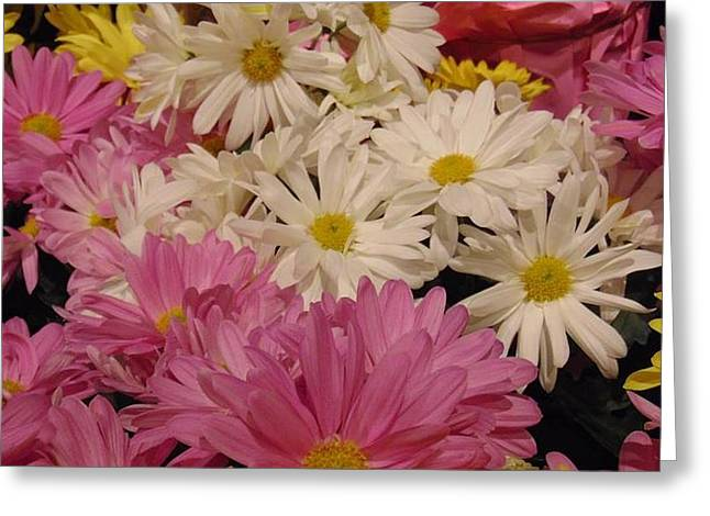 Spring Daisies Greeting Card