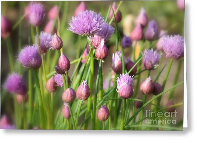Spring Dreams Greeting Card by Carol Groenen