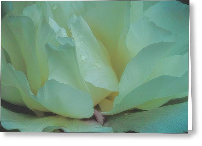 Greeting Card featuring the photograph Spring Dreams by Chris Lord