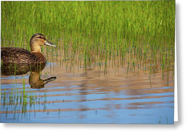 Spring Duck Greeting Card