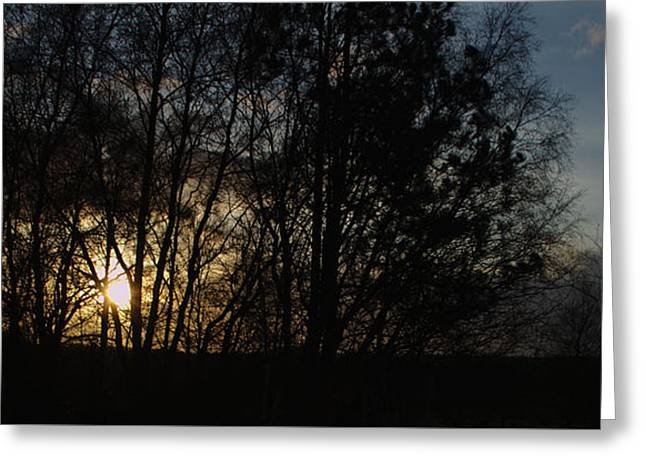 Spring Evening Sunset Through Trees Greeting Card by Adrian Wale