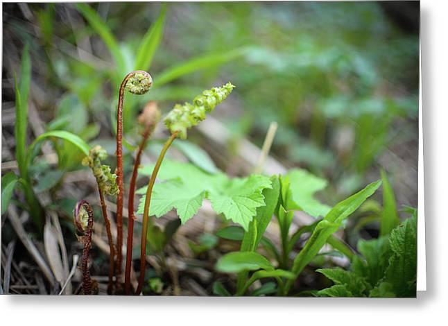 Spring Ferns Greeting Card