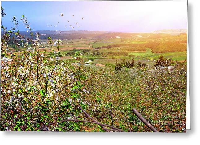 Spring Field Greeting Card by Carlos Caetano