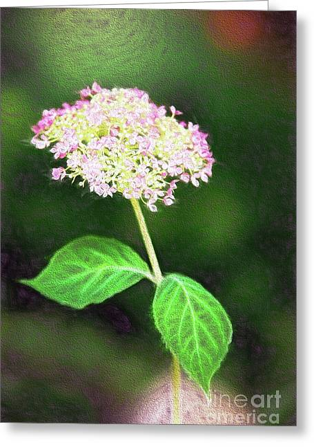 Spring Floral Hydrangea Greeting Card by Sharon McConnell