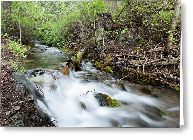 Greeting Card featuring the photograph Spring Flow by Fran Riley