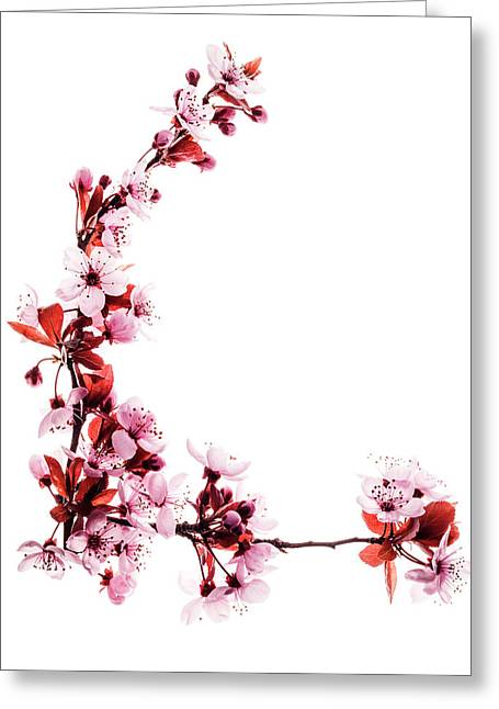 Spring Flower Art On White Greeting Card by Vishwanath Bhat