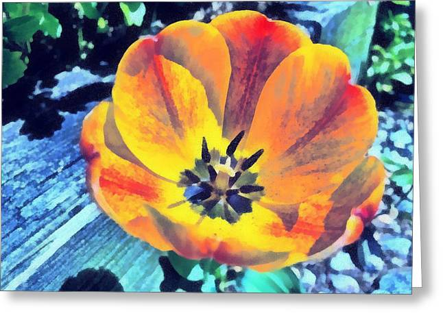 Greeting Card featuring the photograph Spring Flower Bloom by Derek Gedney