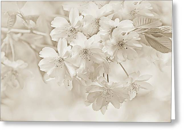 Greeting Card featuring the photograph Spring Flower Blossoms Soft Brown by Jennie Marie Schell