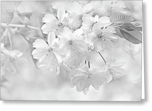 Greeting Card featuring the photograph Spring Flower Blossoms Soft Gray by Jennie Marie Schell