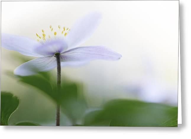 Spring Flower Fragility Greeting Card