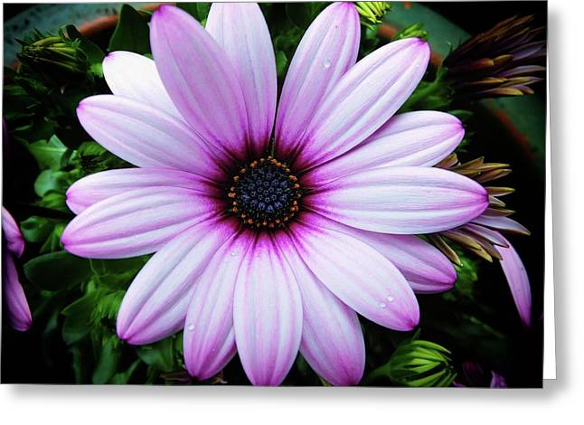 Spring Flower Greeting Card by Karen Stahlros