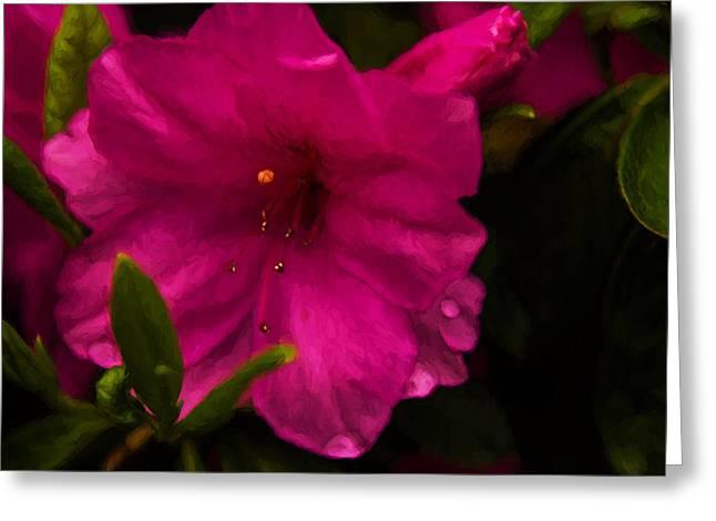 Spring Flowering Beauty - Azalea Floral Greeting Card by Barry Jones
