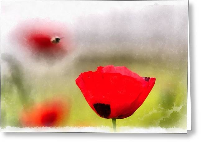 Spring Flowering Poppies Greeting Card