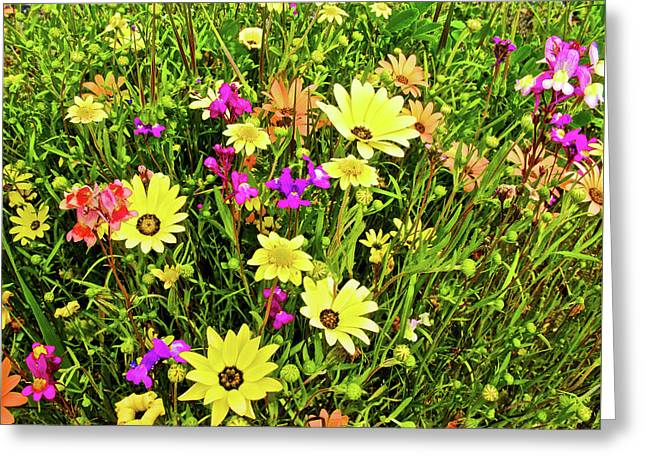 Spring Flowers Along California Highway 99 Greeting Card by Ruth Hager