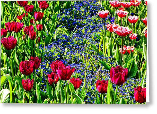 Spring Flowers Impression Greeting Card by Olivier Le Queinec