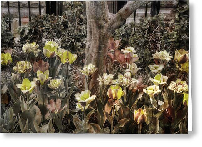 Greeting Card featuring the photograph Spring Flowers by Joann Vitali
