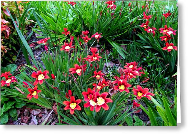 Spring Flowers Greeting Card by Joyce Woodhouse