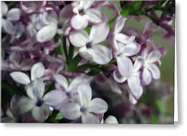 Spring Flowers Greeting Card by Mikki Cucuzzo