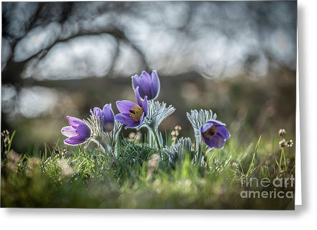 Spring Flowers Greeting Card by Rikard Strand