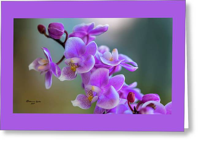 Spring For You Greeting Card by Marvin Spates