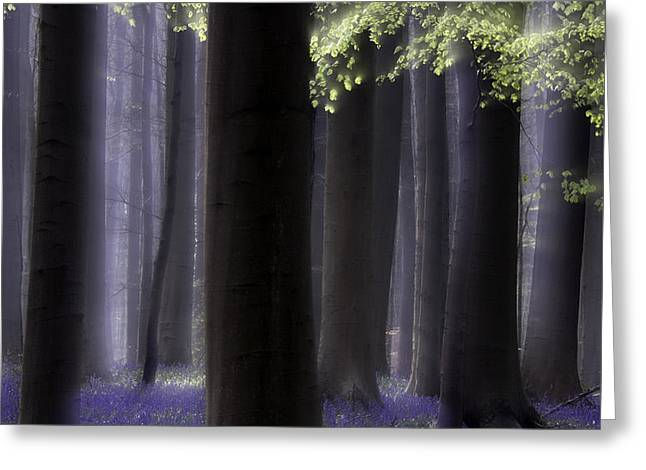 Spring Forest Abstract Wildflowers And First Green Greeting Card by Dirk Ercken