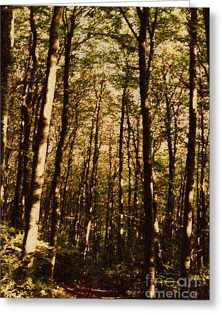 Greeting Card featuring the photograph Spring Forest by Jean Bernard Roussilhe
