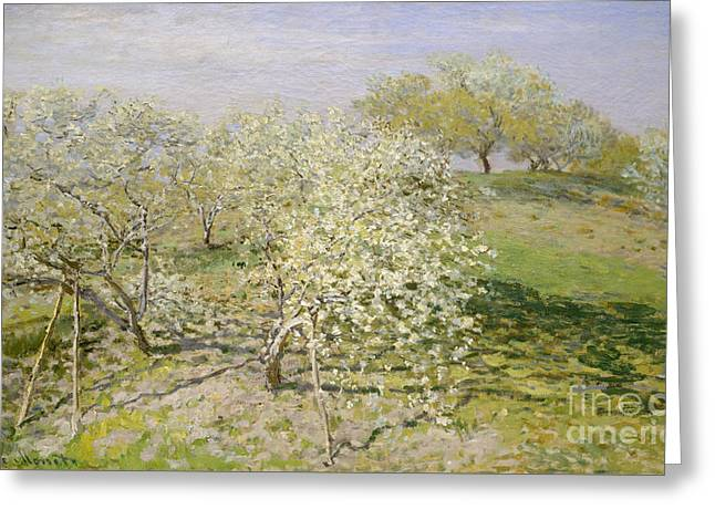 Spring, Fruit Trees In Bloom, 1873 Greeting Card by Claude Monet