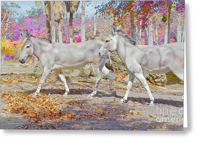 Spring Gallop Edition 3 Greeting Card by Judy Kay