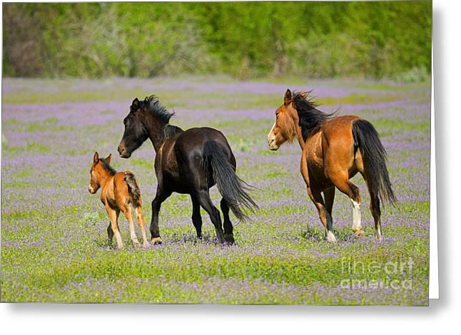 Spring Gallop Greeting Card
