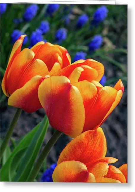 Spring Garden - Act One 3 Greeting Card by Steve Harrington