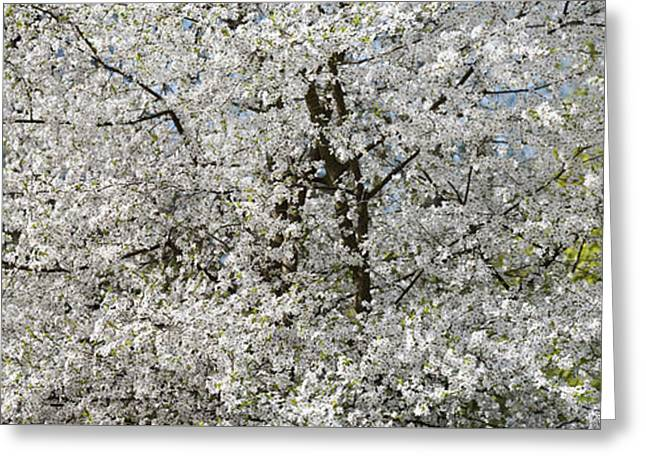 Spring Glory Greeting Card
