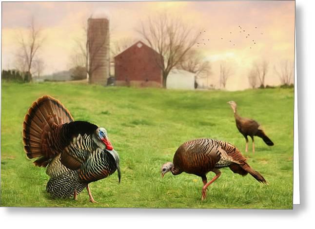 Spring Gobbler Greeting Card by Lori Deiter