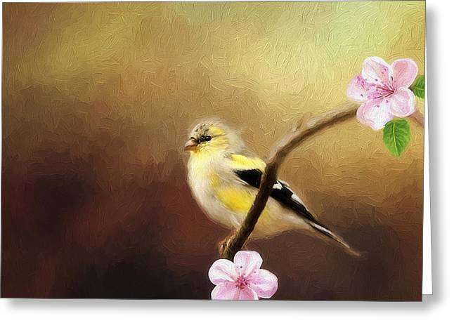 Spring Goldfinch Greeting Card by Darren Fisher