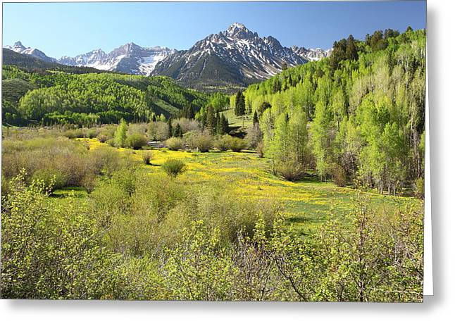 Spring Greens Greeting Card by Eric Glaser