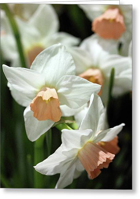 Spring Has Spring Greeting Card by Mary Haber