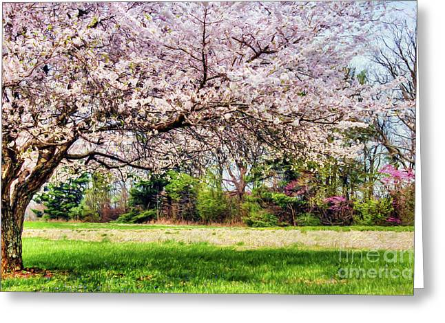 Spring Has Sprung Greeting Card by Darren Fisher
