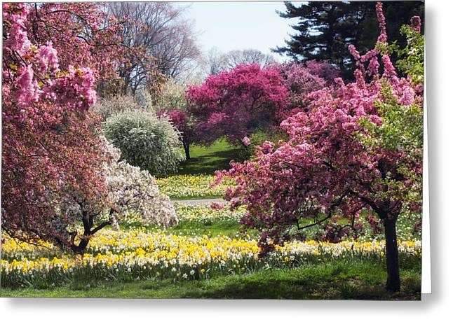 Spring Has Sprung Greeting Card by Jessica Jenney