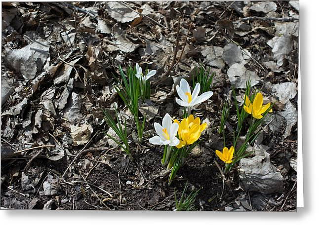 Greeting Card featuring the photograph Spring Has Sprung by Mike Evangelist
