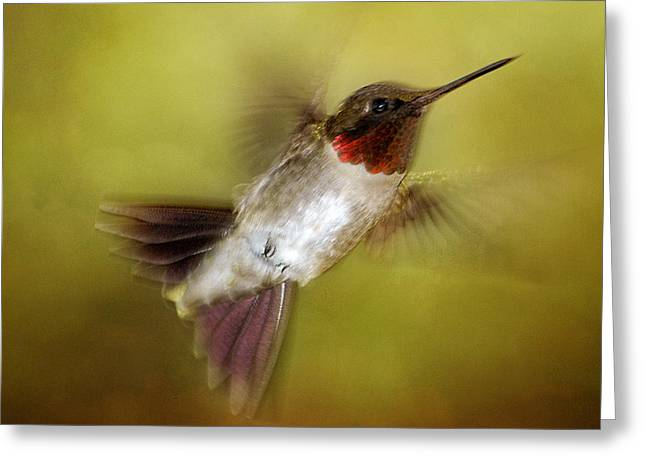 Spring Hummingbird Greeting Card by TnBackroadsPhotos