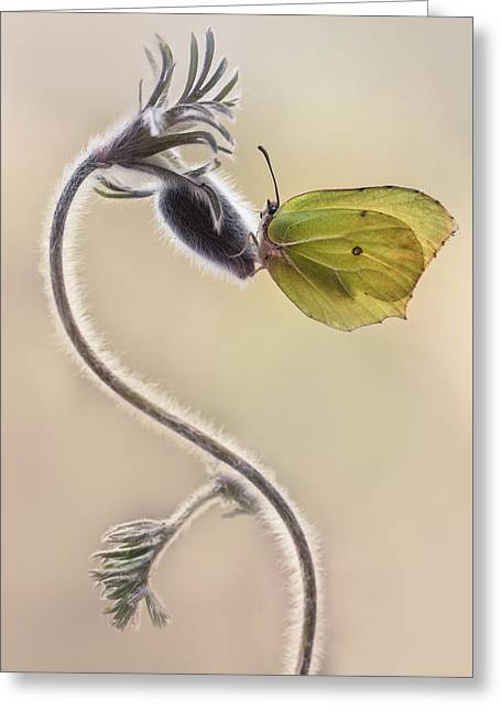 Spring Impression With Yellow Butterfly Greeting Card by Jaroslaw Blaminsky